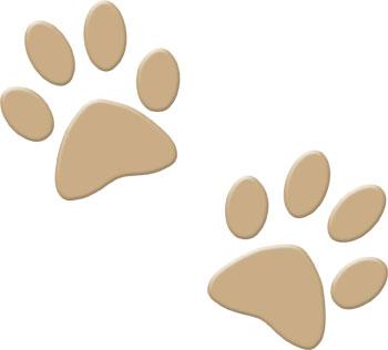 dog-prints-sandy